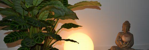 DSC_0183_plante bouddha karine gibot cabinet2